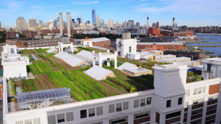 Van greenhouses tot urban farming: 5 succesvolle bedrijven gevestigd op groendaken