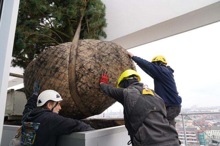 plaatsing bomen op daktuin
