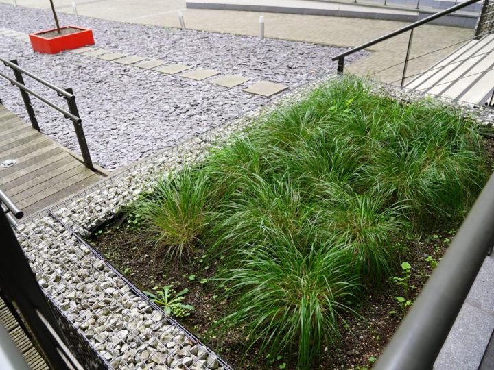 siergrassen op groendak van parking