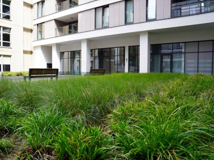 verharding dak groendak met bomen en planten