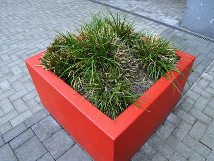 plantenbak op dak ibic