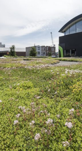 subventions toiture végétale