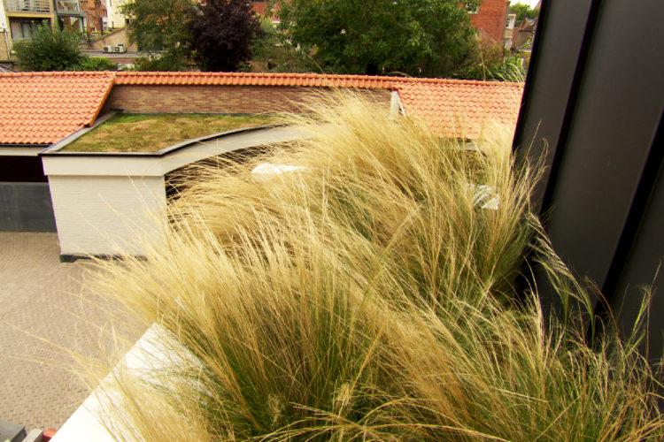 semi intensief groendak met grassen