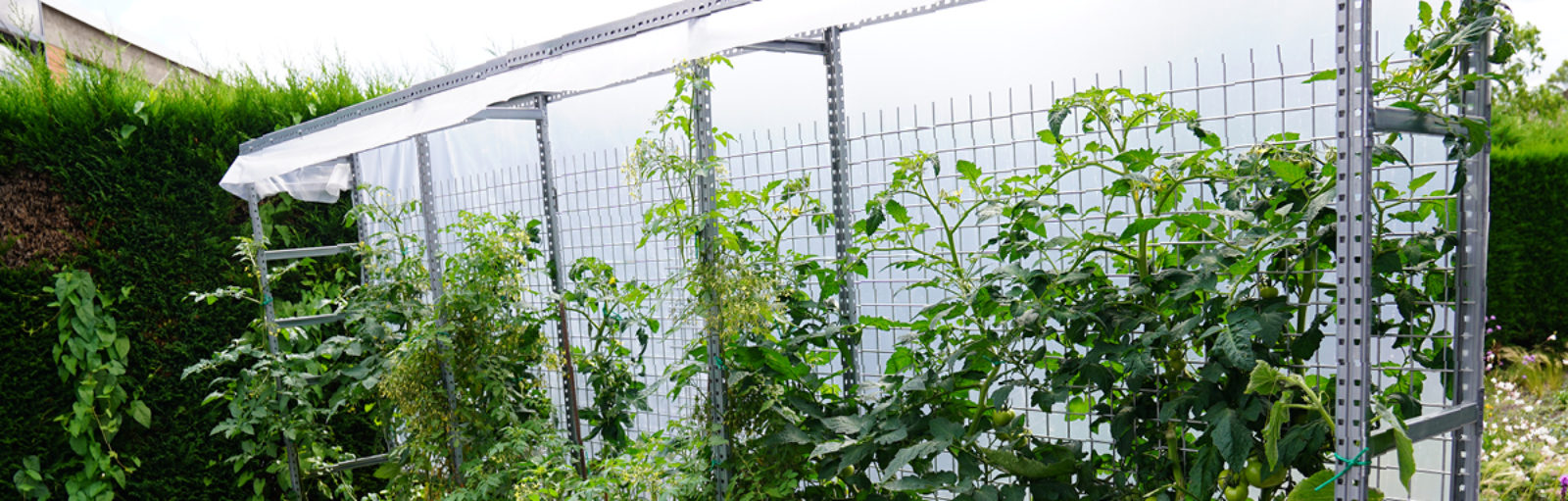 tomatenbakken bij ibic