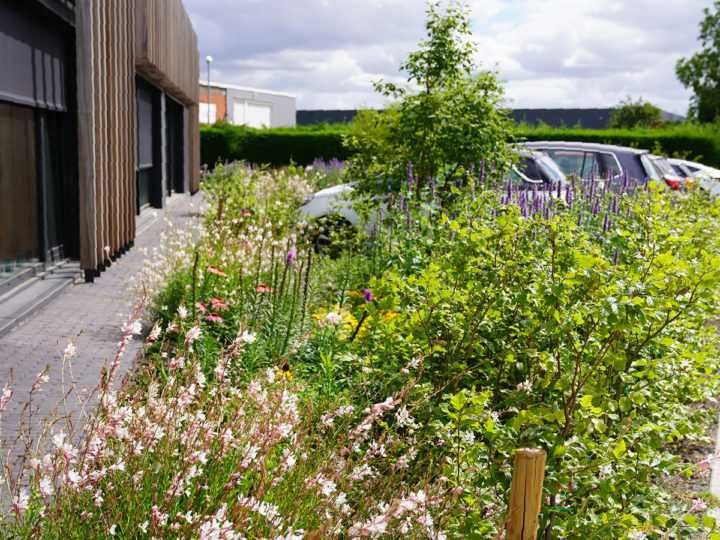 beplanting in bloei aan kantoorgebouw