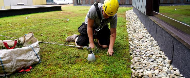 entretien toiture végétale