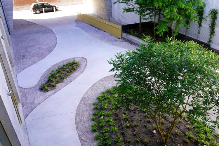 verharding op het dak met bomen en planten