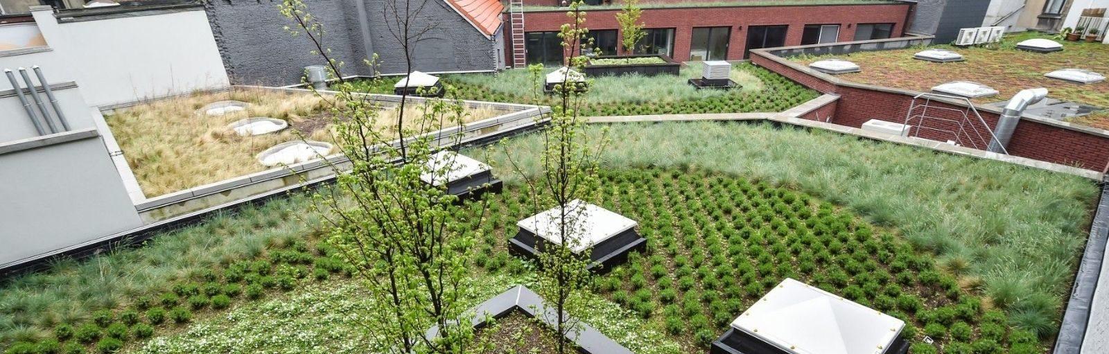groendak klimaatsverandering