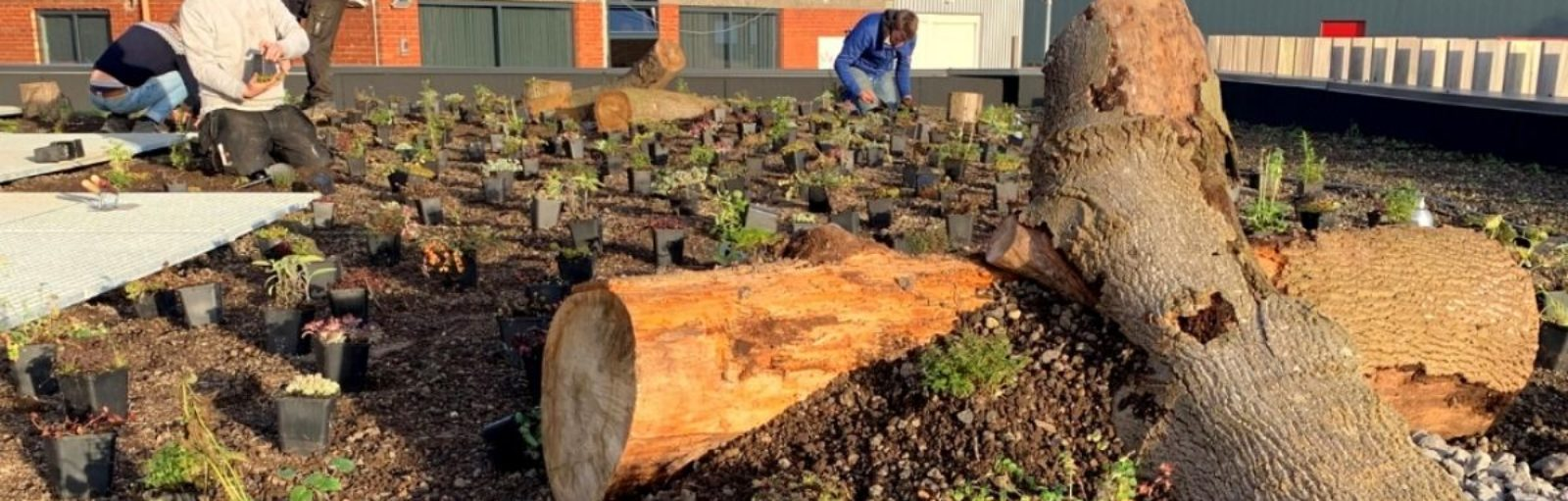beplanting groendak
