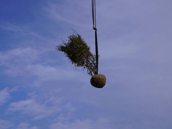 boom op dak plaatsen met kraan