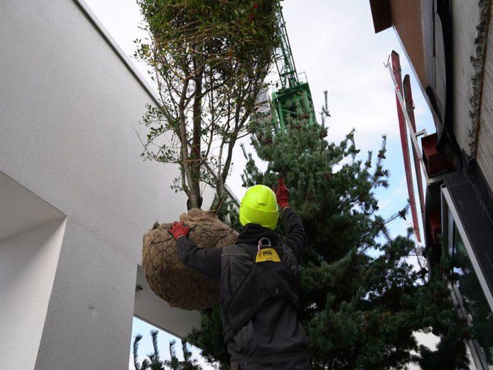 plaatsing boom op groendak