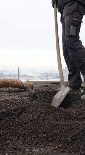 Un substrat de qualité garantit une toiture végétale sans affaissement